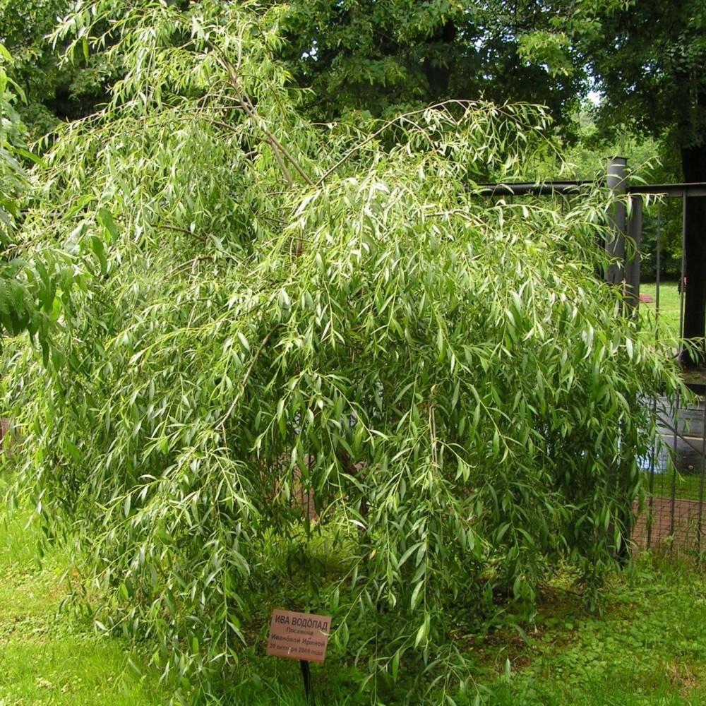 Salix Vodopad
